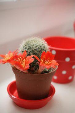 cactus ^_^