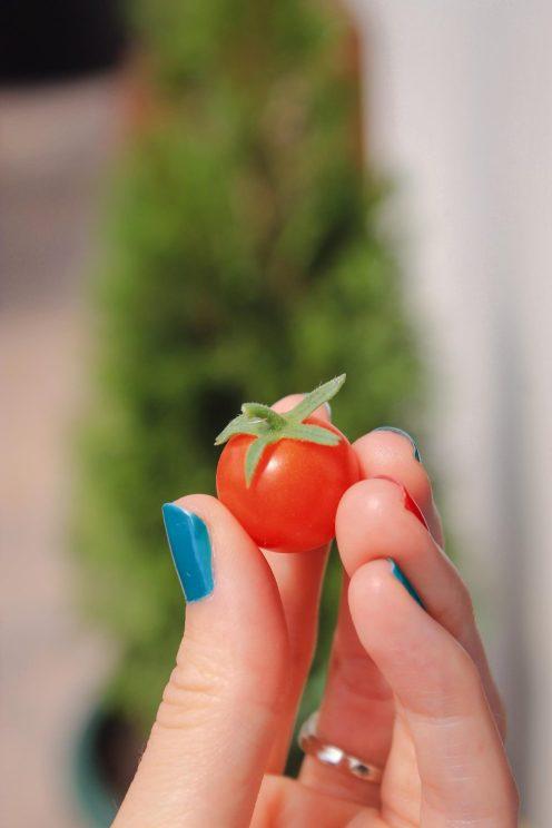 delicious cherry tomato