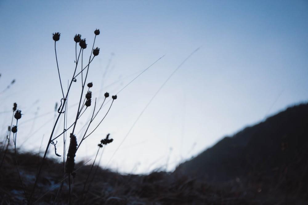 Tara_mountain